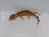 reverse-stripe-raptor-0-1-2011
